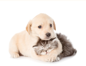 Cats & Dogs 犬猫