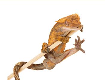 Exoterra 爬虫類