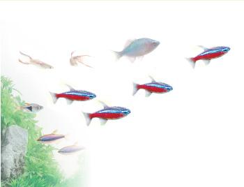 Aquarium 観賞魚