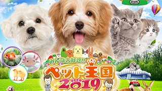 5月5日(日・祝)、6日(月・祝)に京セラドーム大阪にて開催されます、「ペット王国2019」に出展します。