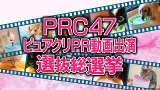 PRC47ピュアクリPR 動画出演選抜総選挙 投票開催中!
