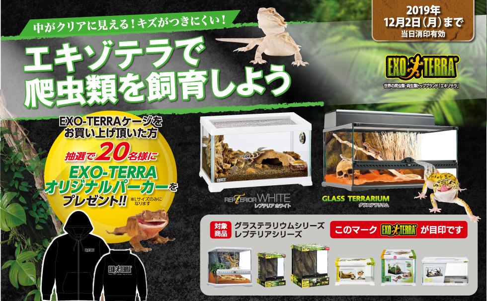 エキゾテラで爬虫類を飼育しよう
