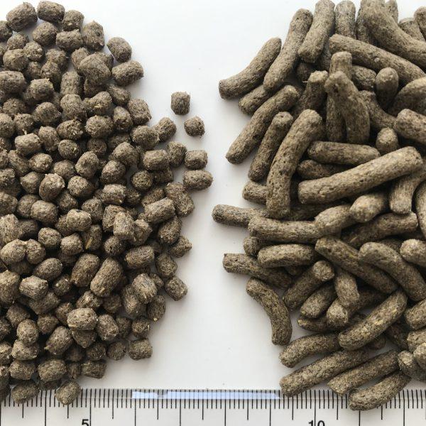 フトアゴブレンドフード粒サイズ