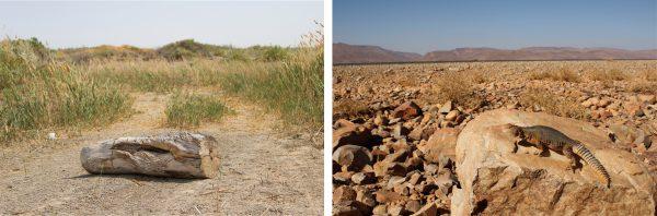 砂漠~亜熱帯地域のイメージ