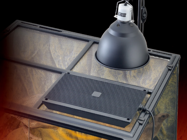 ライトとヒーターは必要?ヒョウモントカゲモドキ(レオパ)を健やかに育てる環境づくり