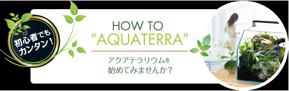 HOW TO AQUATERRA 初心者でもカンタン! アクアテラリウムを始めてみませんか?