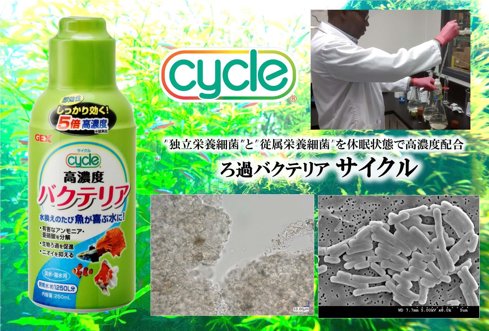 ろ過バクテリア『サイクル』研究施設のレポート