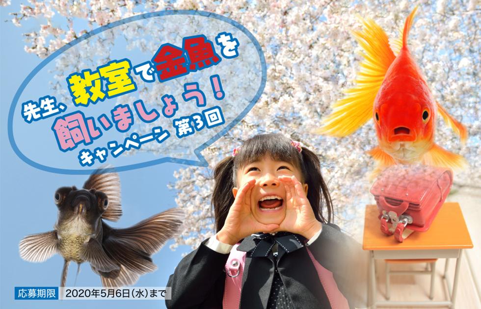 先生、教室で金魚を飼いましょう!キャンペーン 第3回