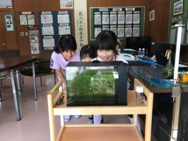 「先生、教室で金魚を飼いましょう」報告書
