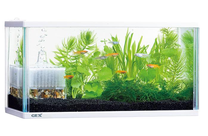 水槽飼育イメージ