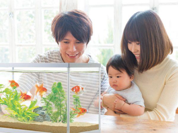 金魚の品種はさまざま!