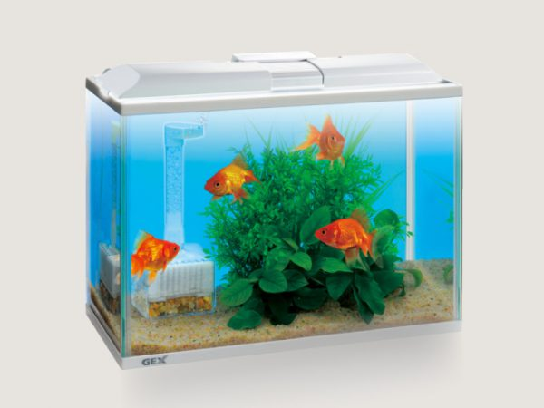 あなたの金魚にピッタリの水槽を探そう!