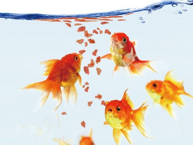 金魚の飼育に必要なアイテム!