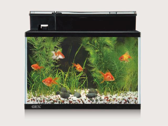 金魚が長生きできる水槽を立ち上げよう!