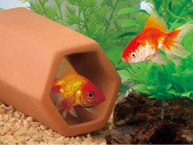オシャレ金魚水槽を作るコツ、教えます!