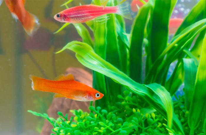 正しい金魚の水換え頻度と飼育水をきれいに保つコツ