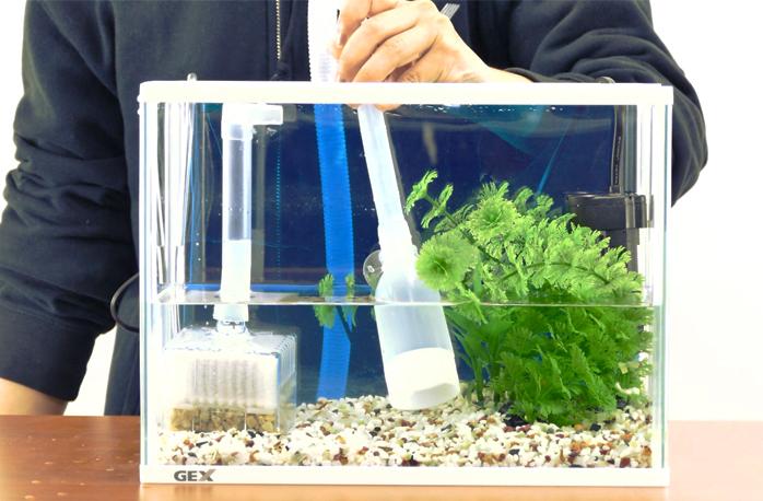 水換えホースで1/3程の水を吸い出す
