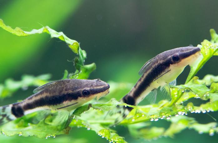 水草やコケ取り生体を活用する
