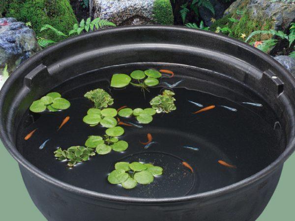 水温の変化には要注意!メダカの屋外飼育の月別ポイント