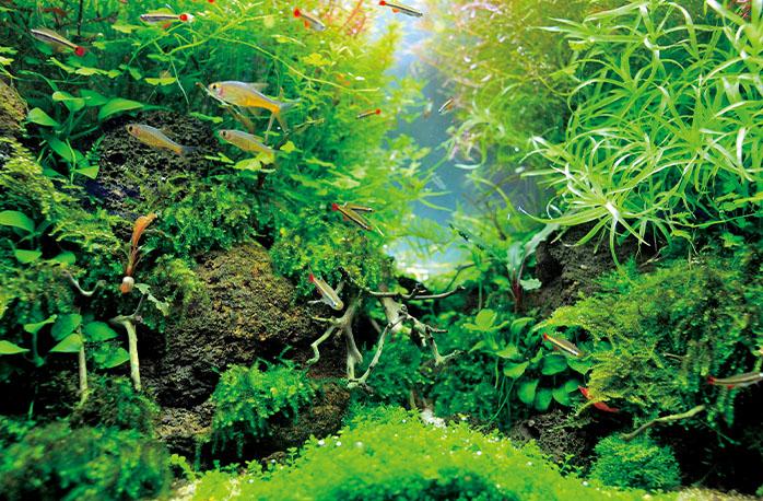 熱帯魚イメージ