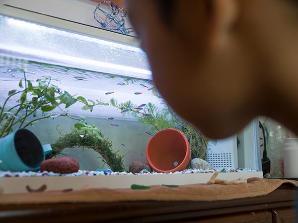 お店でお魚を買ってから、家の水槽に放すまでの注意点